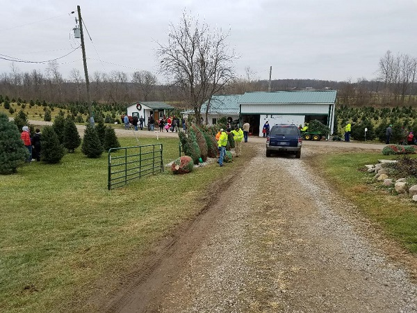kleerview farm christmas trees busy day