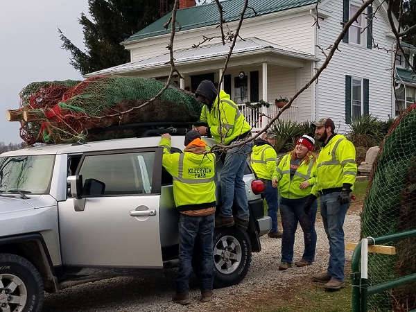 loading christmas trees kleerview farms