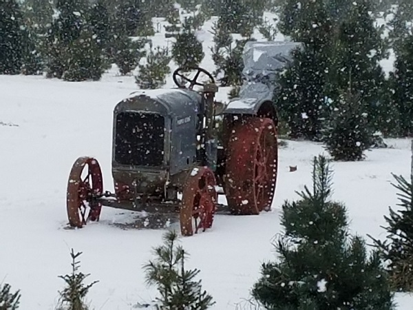 tractor kleerview farms christmas trees