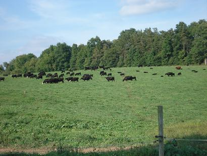 kleerview