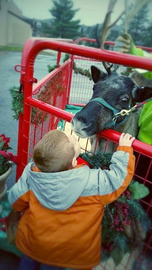 kleerview farm reindeer kissing boy