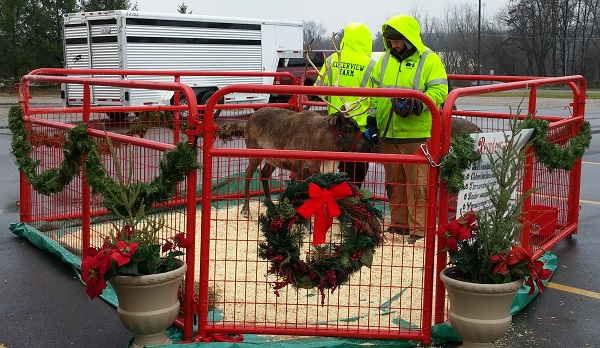kleerview farm reindeer rental display